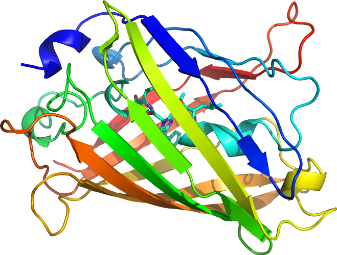crystal structure of the aequorea victoria green fluorescent protein pdf
