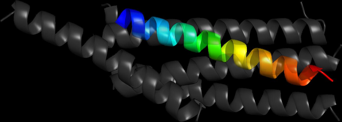 SCOPe 2 06: Domain d2b2ta3: 2b2t A:186-186